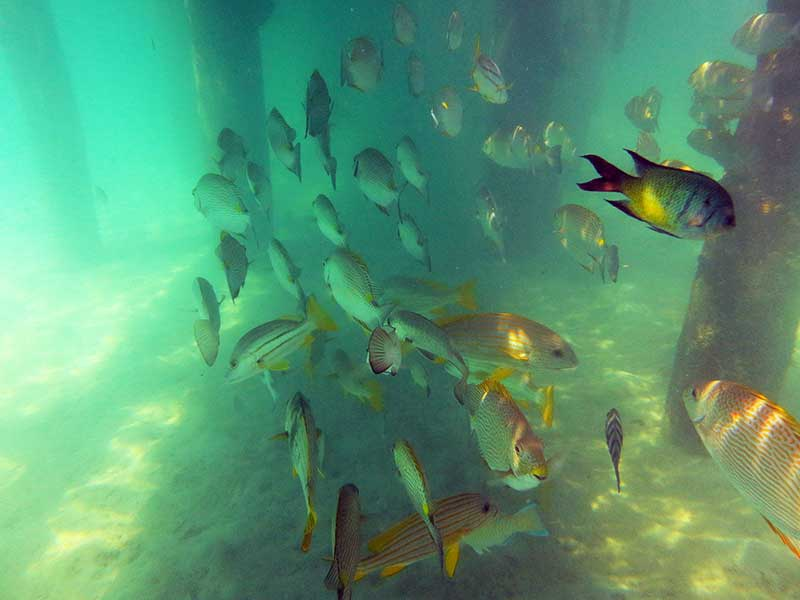 Large schools of fish under the jetty at Green Island