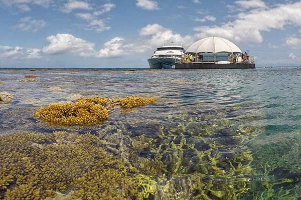 Great Adventures Outer reef Pontoon