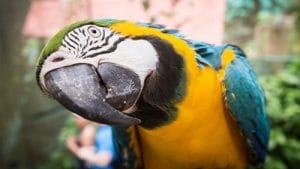 Bird World in Kuranda